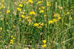 Kleurrijke vogelpootjewildflowers Stock Foto's