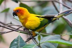 Kleurrijke vogels Stock Afbeeldingen