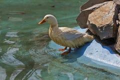 Kleurrijke vogels 3 Stock Foto's