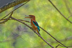 Kleurrijke vogelzitting op een tak Royalty-vrije Stock Fotografie