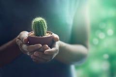 Kleurrijke vrouw die een kleine cactus in handen zacht op aard houden Royalty-vrije Stock Afbeeldingen