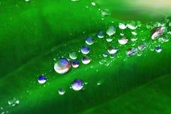Kleurrijke Waterdalingen op Bladeren royalty-vrije stock foto's