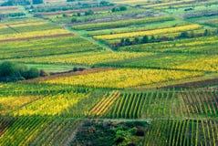 Kleurrijke wijngebieden royalty-vrije stock afbeelding