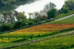 Kleurrijke wijngebieden stock foto's