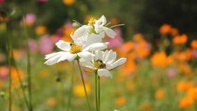 Kleurrijke wilde bloemen die in een zachte wind blazen stock video