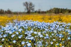 Kleurrijke wilde bloemen, super bloeiseizoen in Californië royalty-vrije stock afbeeldingen