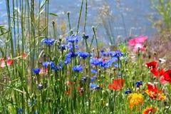 Kleurrijke Wildflowers op Gebied Stock Foto's
