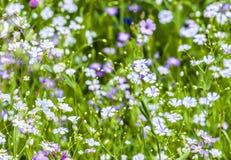 Kleurrijke wildflowers op weide Royalty-vrije Stock Foto's