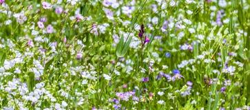 Kleurrijke wildflowers op weide Stock Fotografie