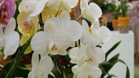 Kleurrijke witte orchideebloemen op tentoonstelling in serre stock video