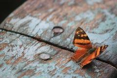 Kleurrijke woodlover Royalty-vrije Stock Foto