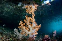 Kleurrijke Zachte Koralen in huidig-Geveegd Kanaal in Raja Ampat royalty-vrije stock foto