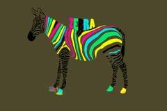 Kleurrijke zebra Stock Afbeelding