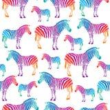 Kleurrijke zebra Royalty-vrije Stock Afbeeldingen