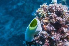 Kleurrijke zeeschede Stock Foto