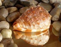 Kleurrijke zeeschelpbezinning met zenkiezelstenen Stock Fotografie