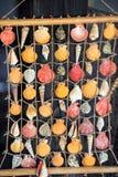 Kleurrijke zeeschelpen die op een visnet hangen Royalty-vrije Stock Foto
