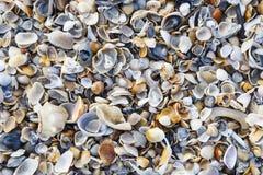 Kleurrijke zeeschelpen op het strand in Florida royalty-vrije stock afbeeldingen
