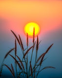 Kleurrijke zon met gras Royalty-vrije Stock Foto's