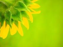 Kleurrijke zonnebloem Royalty-vrije Stock Afbeeldingen