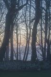 Kleurrijke zonsondergang door bomen Stock Foto's