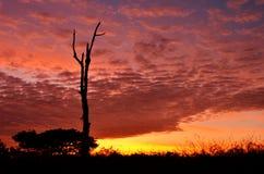 Kleurrijke zonsondergang met silhouet van boom Stock Fotografie