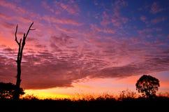 Kleurrijke zonsondergang met silhouet van boom Stock Afbeeldingen