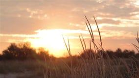 Kleurrijke zonsondergang op het gebied, mooie zonsondergang in de wildernis stock videobeelden