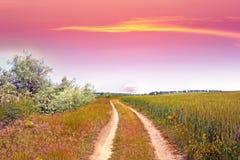 Kleurrijke zonsondergang over tarwegebied stock foto