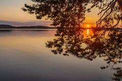 Kleurrijke zonsondergangmening door boomtak stock foto's