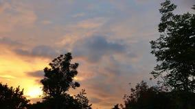 Kleurrijke Zonsopgang achter Tijdspanne van de Bomentijd 01 stock videobeelden