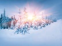 Kleurrijke zonsopgangscène in nevelig bergbos Stock Foto