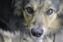 Klibbade den härliga inhemska hunden för rödhåriga mannen ut hans tunga royaltyfri fotografi