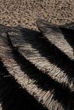 Klibbat av strandparaplyer på stranden Royaltyfri Bild