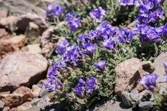 Klibbiga Jacob stege, Yellowstone nationalpark arkivbild