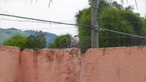 Klickfågel Royaltyfri Foto
