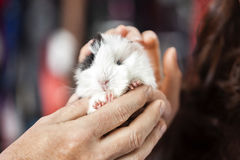 Klient I sprzedawca Trzyma Ślicznego królika doświadczalnego W sklepie Obraz Stock