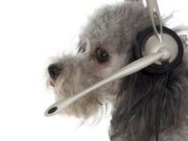klient szczeniaka usług Obrazy Royalty Free