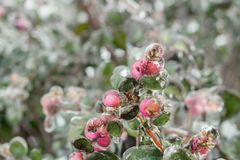 Klimatförändring - isstorm Royaltyfri Fotografi