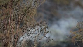Klimawandel Feuer in der Natur stock footage