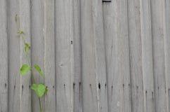 Klimmer op oude houten muur Stock Afbeelding