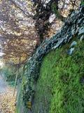 Klimmers en mos in de herfst stock afbeelding