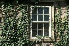 Klimop behandeld venster Stock Afbeelding