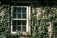 Klimop behandeld venster Stock Foto