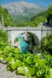 Klimop door de brug Royalty-vrije Stock Afbeelding