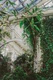 Klimop en installaties in tuin met wit venster royalty-vrije stock afbeeldingen