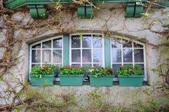 Klimop en venster Royalty-vrije Stock Fotografie