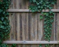Klimop het groeien op oude houten tuinomheining stock foto's