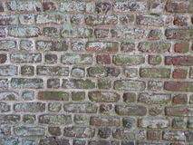 Klimop op bakstenen muur Stock Foto's