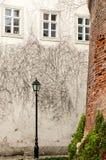Klimop op een Pleistermuur Stock Fotografie
